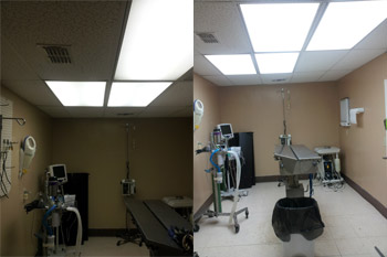 Veterinarian Lighting